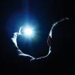Spectacle VLAM PRODUCTIONS à ANGERS @ LE QUAI - THEATRE 400 - Billets & Places